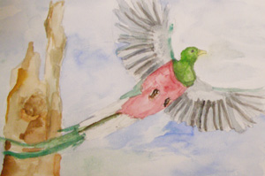 Watercolor of a male quetzal by Jackie.